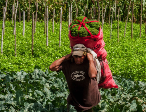 What's New – Impact Entrepreneurship: key for tackling constraints in the food value chains