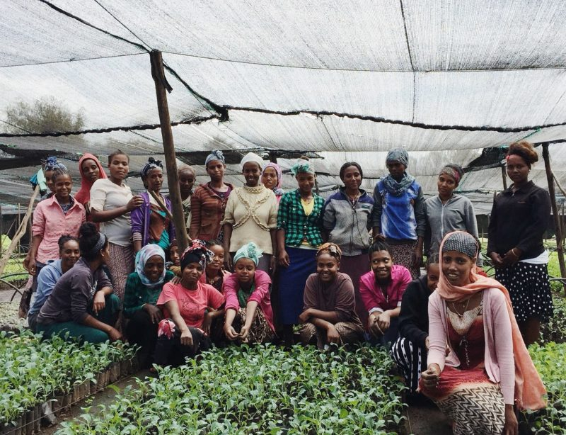Smallholder farmers producers of organic for export