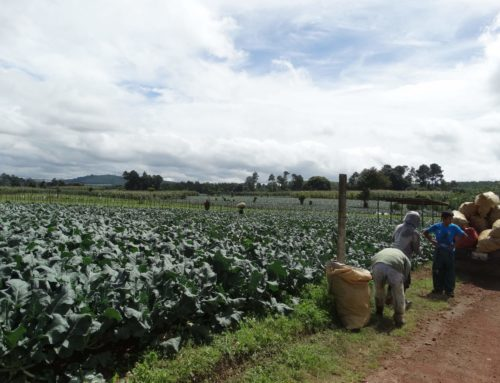 Defining sustainable food supply chains