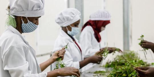 GreenPath Food, Ethiopia